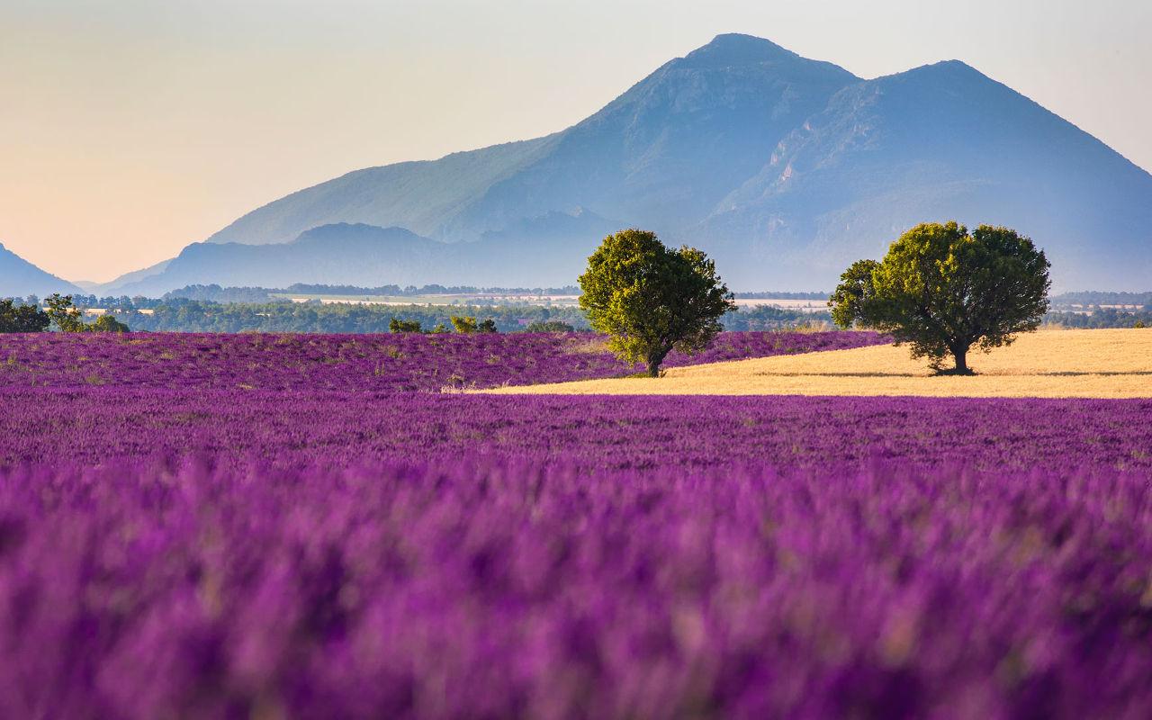 Прованс – край солнца, винограда и лаванды